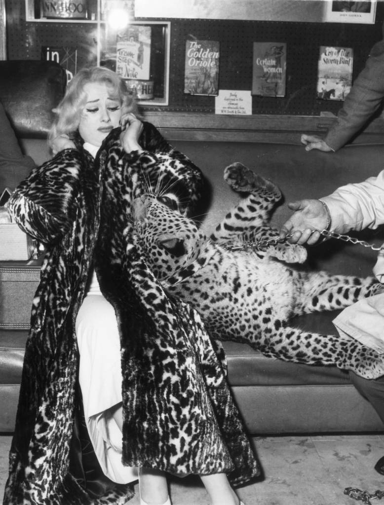 2nd March 1958: Glamour model and actress, Sabrina, wearing an animal skin fur coat, recoiling from the attentions of a leopard cub on a leash. (Photo by Keystone/Getty Images)