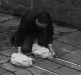 Flashback to 1934 – How to mesmerise a chicken