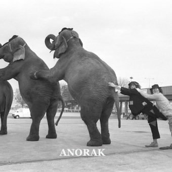 Elephants behaving sadly in the 20th Century: photos