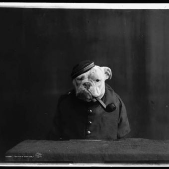 1905: Portraits of Bulldogs in Fancy Dress