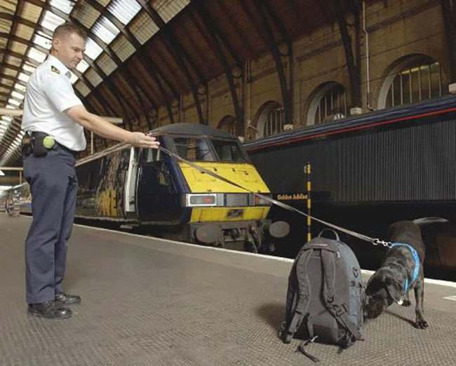 HM Customs and Excise dog handler Rob Pike and his dog Jess check passengers for large amounts of cash at London's King's Cross railway station as part of Operation Payback. Customs and Excise and police want to seize the proceeds of criminal activity being brought into London for laundering from other parts of the UK. As part of the initiative, dogs trained to detect the ink on currency notes will be used on trains and platforms to detect large amounts of cash concealed either on passengers or in their bags.