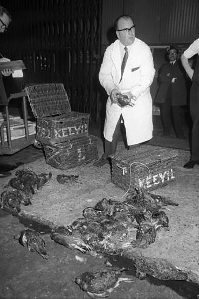 Mr Archie Grice with the first baskets of grouse to arrive at King's Cross station from the Yorskhire Moors on the first day of the new shooting season