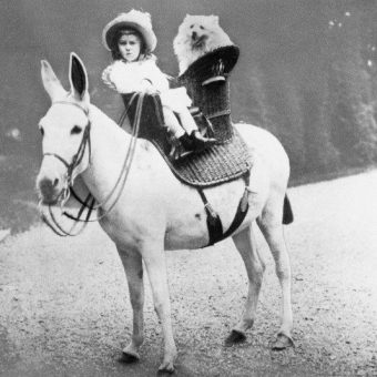 Flashback: Little Lord Franklin Delano Roosevelt And Budgy Ride His Pet Donkey In A Short Skirt