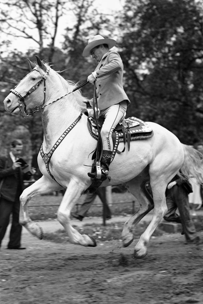 To the delight of promenaders and some hundreds of small boys, Tom Mix, hero of many a thrilling western film, brought his famous white horse, Tony II, into Rotten Row for a ride. A fine action picture of American film star Tom Mix on Tony II in Rotten Row in London, on Sept. 4, 1938. (AP Photo)