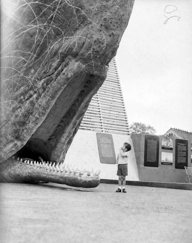 A young boy stares at a model of a Sperm Whale during the 'Month of the Whale' exhibition at London Zoo. Date: 23/05/1955