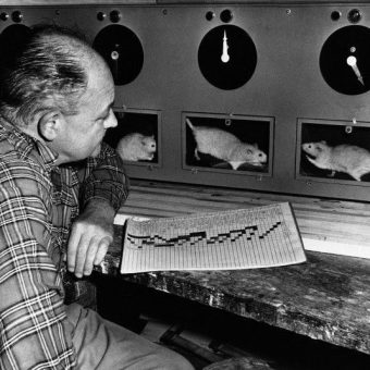 1947: Edward Moffitt And His Stable Of 80 Albino Racing Rats