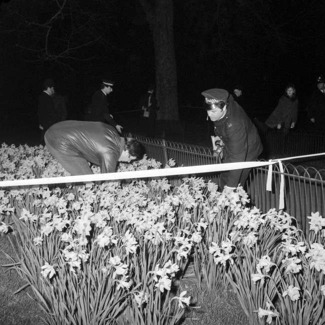 oon after attempted kidnap of Princess Anne, police officers search among the daffodils blooming at the side of the Mall. T