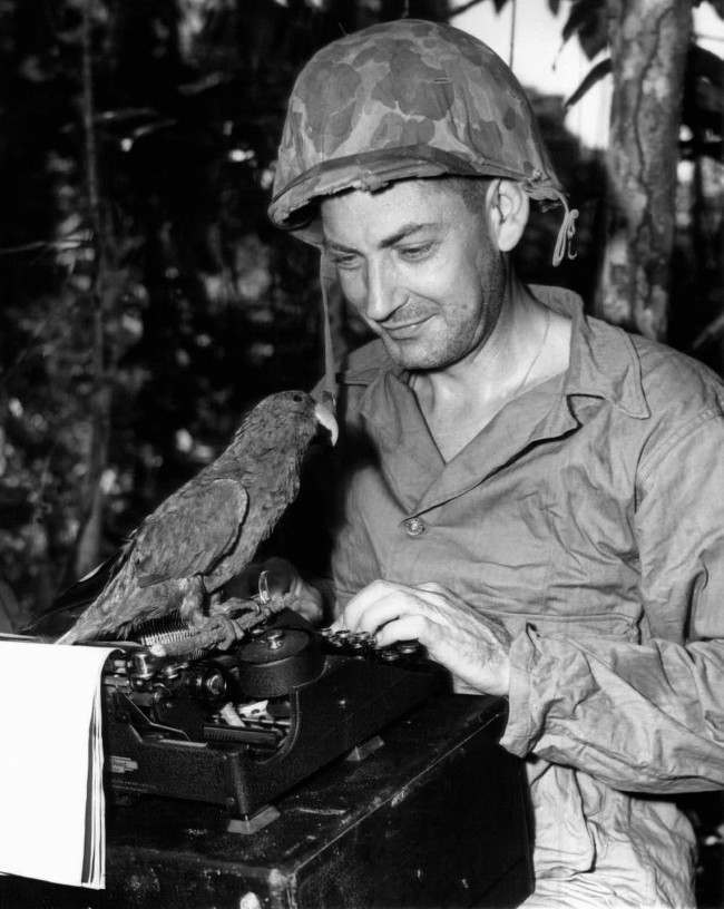 "Charlie McMurtry, Associated Press war correspondent, writes some copy on Guadalcanal as his pet, ""Flags,"" the psychopathic parrot, Nov. 25, 1945 who flew 10,000 miles without once flapping his wings, but committed hara-kiri by hanging, sits perched on his typewriter. McMurthy acquired the bird at Treasury Island while enroute from Bougainville to Guadalcanal. (AP Photo)"
