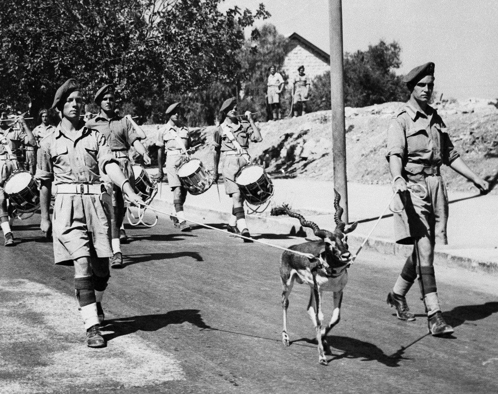 "Private John Poolton, left, and William Hammond, right, both from Birmingham, England, hold ""Bobbie"", as the black buck mascot of the Royal Warwickshire Regiment, marches at the head of the regimental band along King George Avenue in Jerusalem, Israel on Oct. 18, 1947. (AP Photo) Ref #: PA.10408029 Date: 18/10/1947"