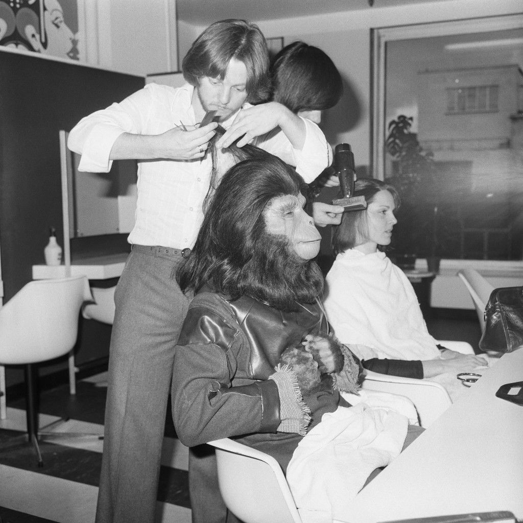 Hairdresser Paul Kelly tends to Planet of the Apes character Galen, who is one of the attractions in the children's department of an Oxford Street store leading up to Christmas. archive-pa173468-1 Ref #: PA.15216909  Date: 01/12/1975