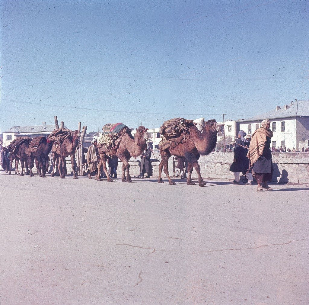 A caraven of camels carry freight along a road in Kabul, Afghanistan, Nov. 1961. (AP Photo/Henry S. Bradsher)