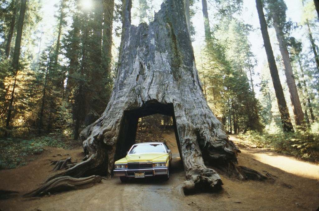 Sequoia Garage, October 1988.
