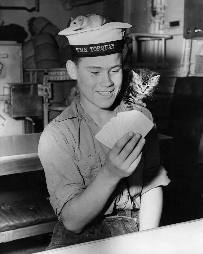 27th July 1956: Junior seaman Trevor Grunkhurn plays cards with the help of the ship's pets, Joey the golden hamster, and Smew the kitten. They are aboard the HMS 'Torquay', one of the new class of Anti-Submarine Frigates. (Photo by Hulton Archive/Getty Images)