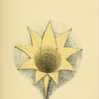 Geometrical Psychology: Mr Betts' 19th-Century Mathematical Illustrations on The Evolution Of Consciousness