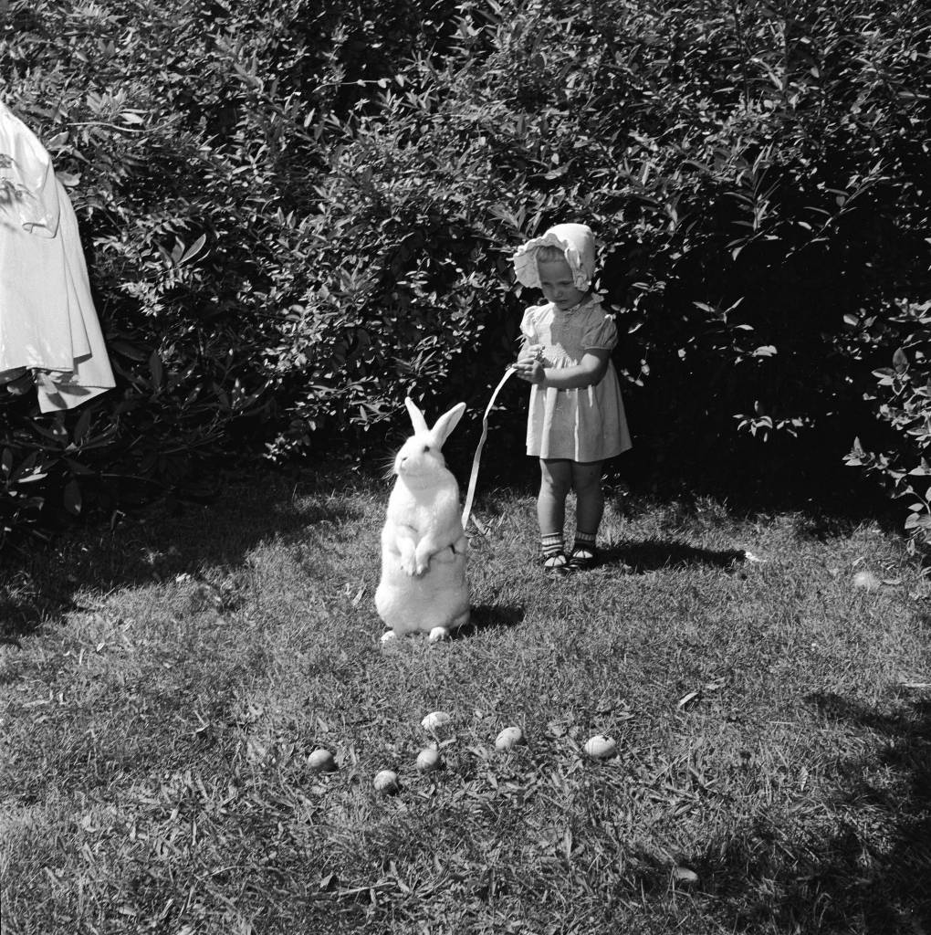 circa 1955: A little girl holds an Easter bunny on a leash, during a hunt for the easter eggs scattered in the grass. (Photo by George Pickow/Three Lions/Getty Images)