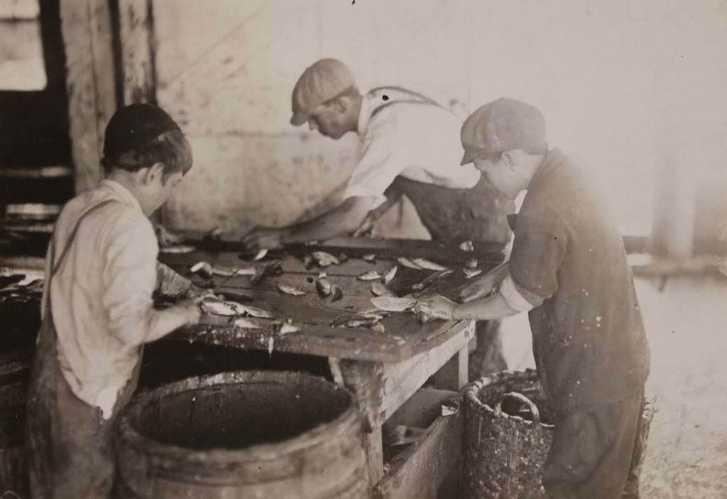 Boys working in Sardine Cannery, Eastport, Maine - 1911