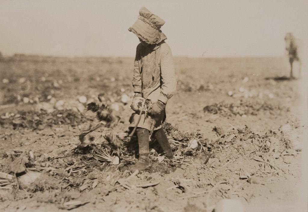 Mollie Steuben topping beets, near Sterling, Colorado - October 21 1915
