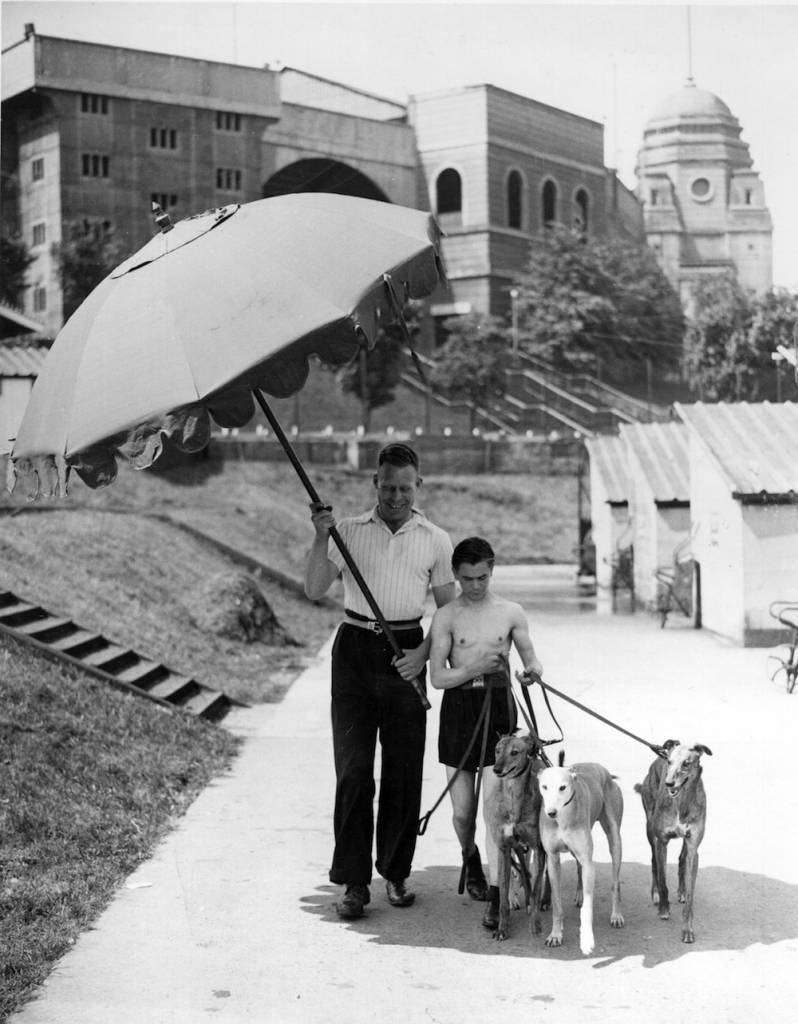 19th June 1936:  Valuable racing greyhounds taking exercise in the grounds of Wembley Stadium protected from the blazing sun by a large umbrella.  (Photo by Fox Photos/Getty Images)
