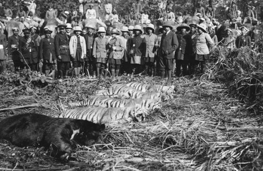circa 1912:  King George V with the day's kills on a tiger hunt, during his Indian Durbar Tour.  (Photo by Hulton Archive/Getty Images)