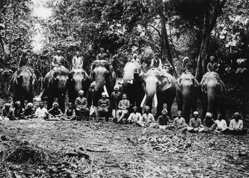 India, elephant hunting. Mahouts, forest officers and tame elephants. - probably in the 1910s