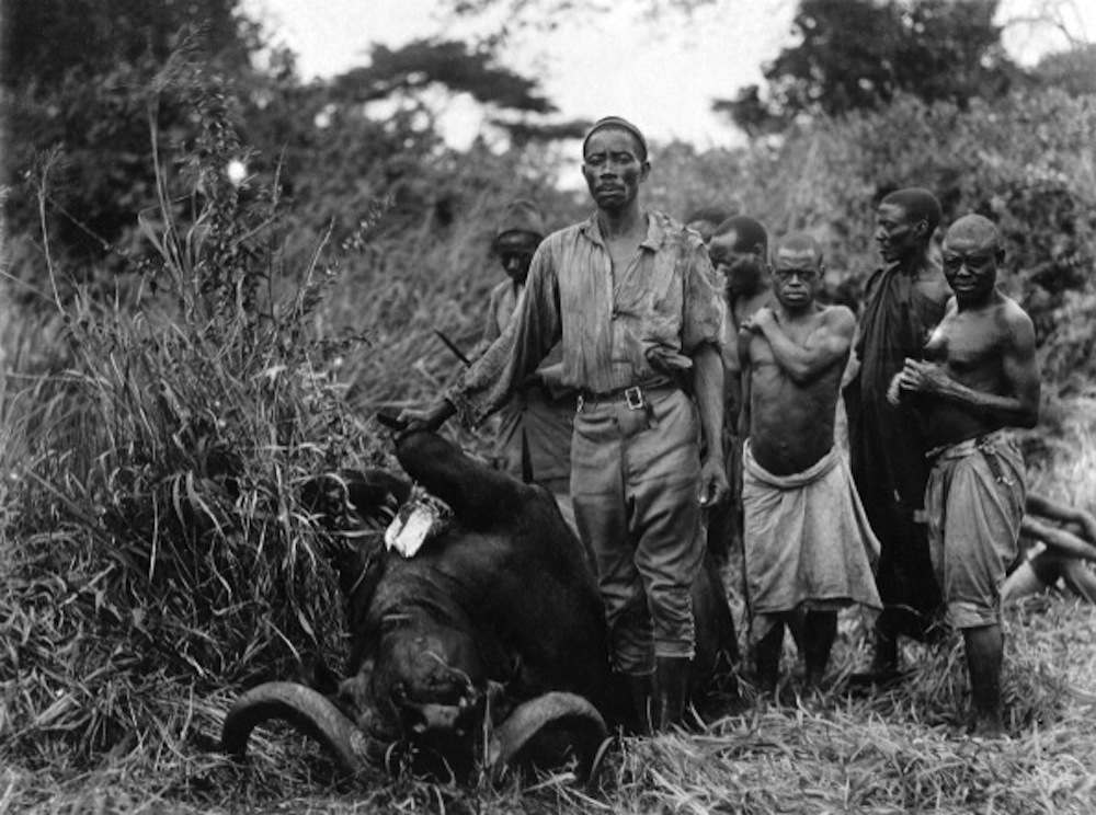 Africa, East Africa, Uganda, hunter with killed buffalo, date unknown