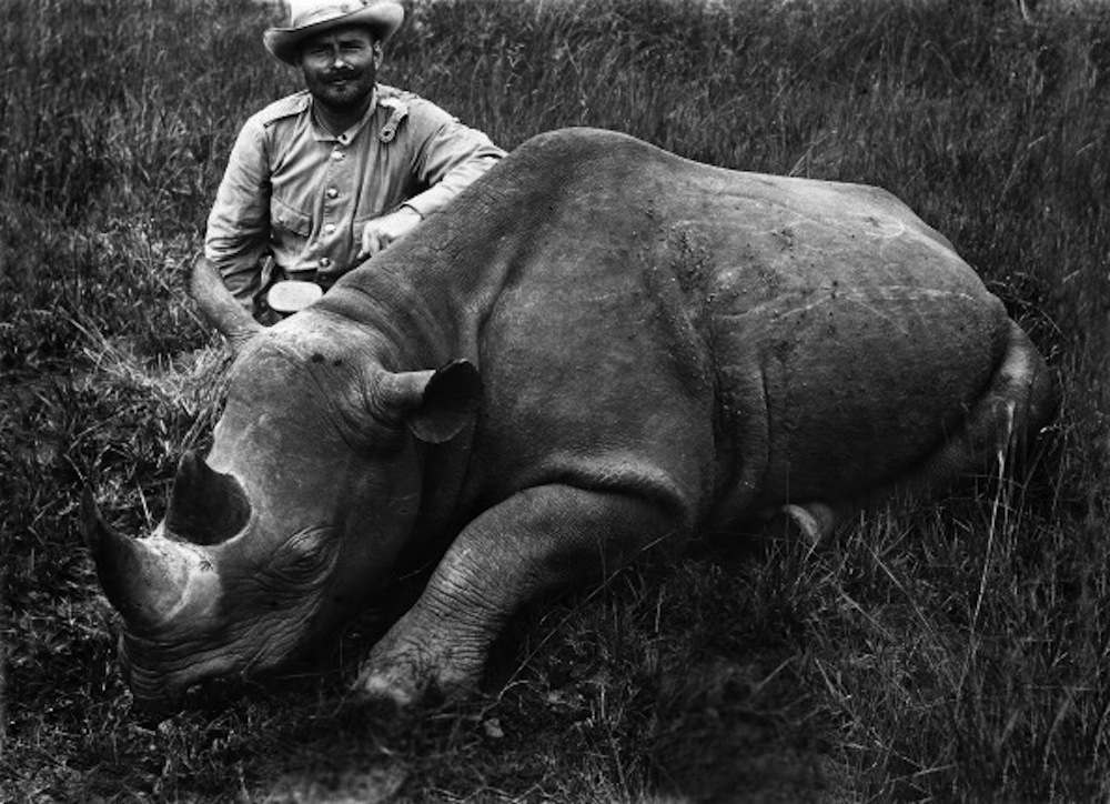 German (colonial) East Africa : Big game hunter with killed rhinoceros . without date, about 1905