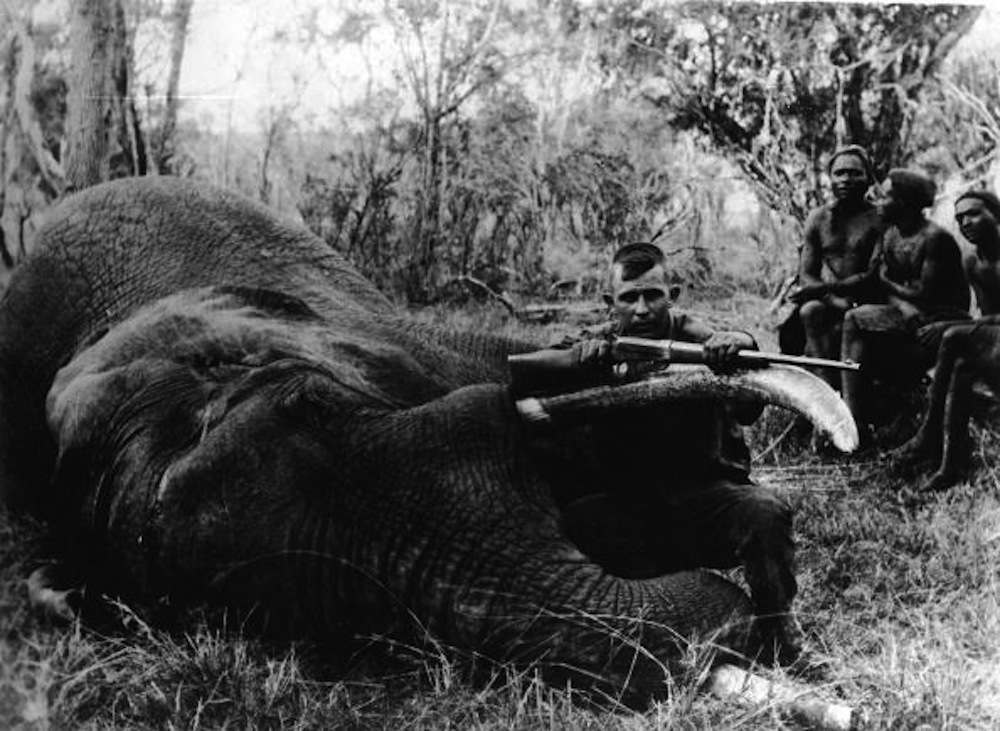 American big game hunter and museum patron Henry A. Snow holds a Winchester M1895 rifle and squats by the mouthparts of an African savannah elephant (Loxodonta africana) that he has shot during his several year safari to obtain specimens for a natural history museum in Oakland, California, somewhere in Africa, late 1910s. Snow collected over 150 mammals and 1,500 birds for the collection. Four local men sit behind Snow.