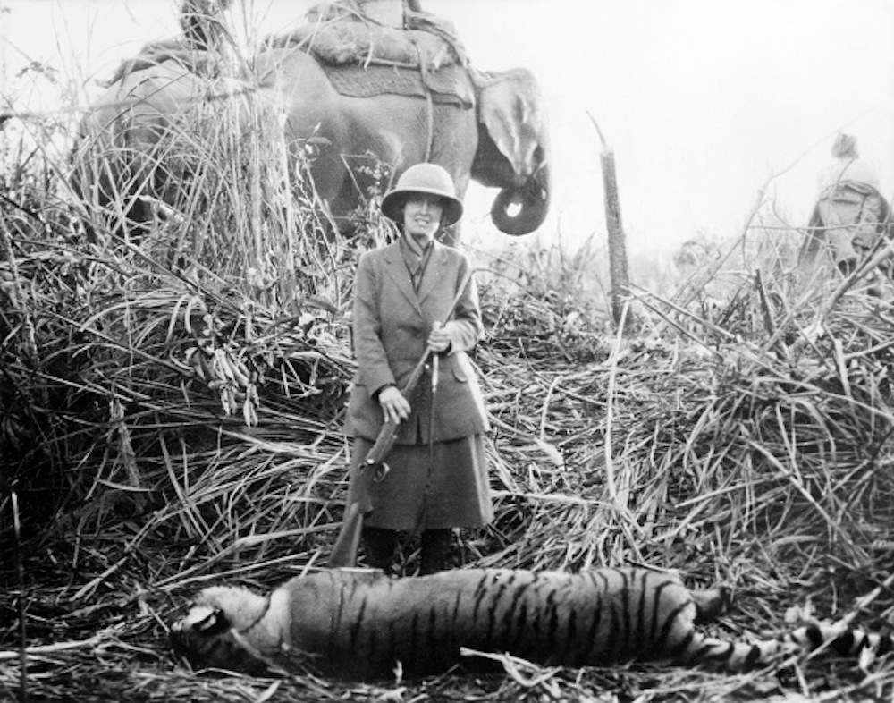 Roosevelt Theodore, sons: James Simpson Roosevelt Field Museum Hunting Expedition to Central Asia (Theodore R. jr. and Kermit R.) - Tiger hunt: Mrs. Kermit Roosevelt (Belle Wyatt Willard) with a killed Tiger (Nepal or India) 1925