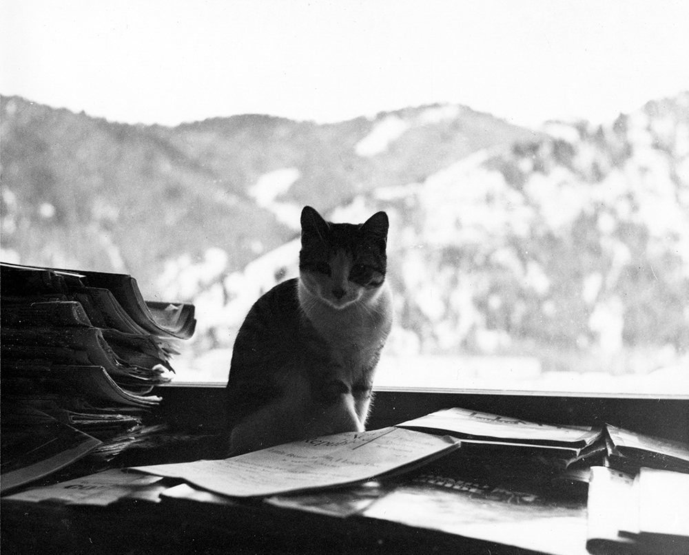 "EH3384P  nd. One of Ernest Hemingway's cats ""Big Boy Peterson"" sitting indoors with a view of Baldy Mountain in the background.  Ketchum, Idaho. Copyright unknown in the Ernest Hemingway Collection at the John F. Kennedy Presidential Library and Museum, Boston."