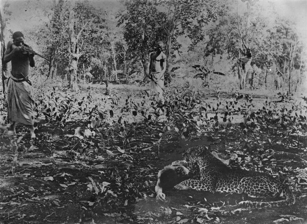 21st December 1910:  An African villager takes aim at a leopard which has attacked a youth.