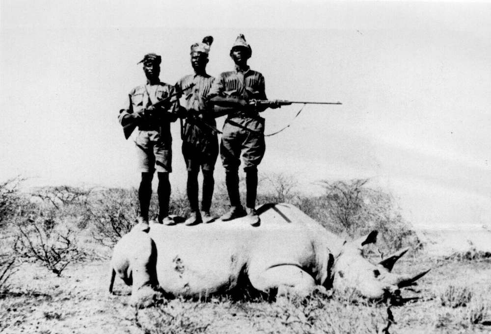 circa 1915:  Three black troopers with rifles stand on top of a slain rhinoceros in Kenya.