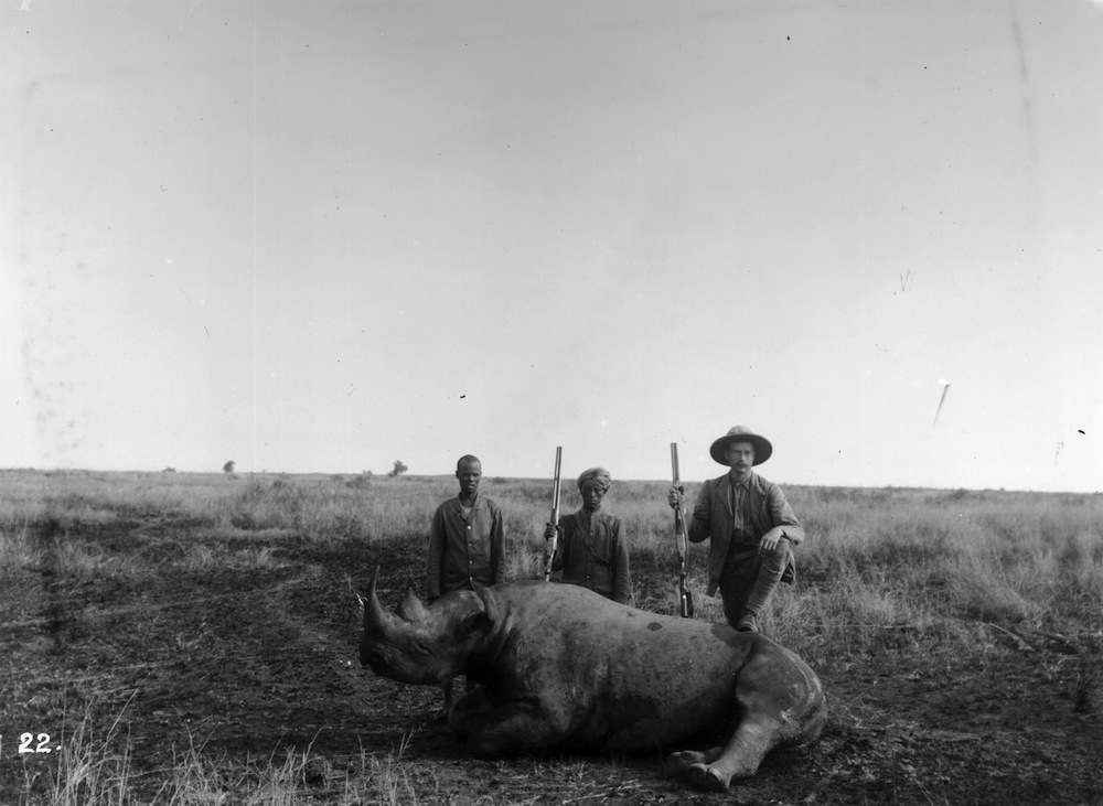 circa 1895:  A hunter has his foot on a dead rhino in a big game hunt in East Africa.