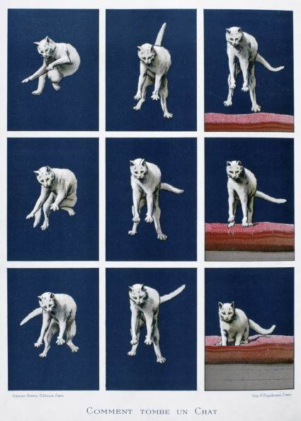 Series of frames of a cat falling. Cinematography enabled Muybridge and Marey to study the locomotion of animals. From 'Les dernieres merveilles de la science' (The Latest Marvels of Science), Paris, c1895. Physiology