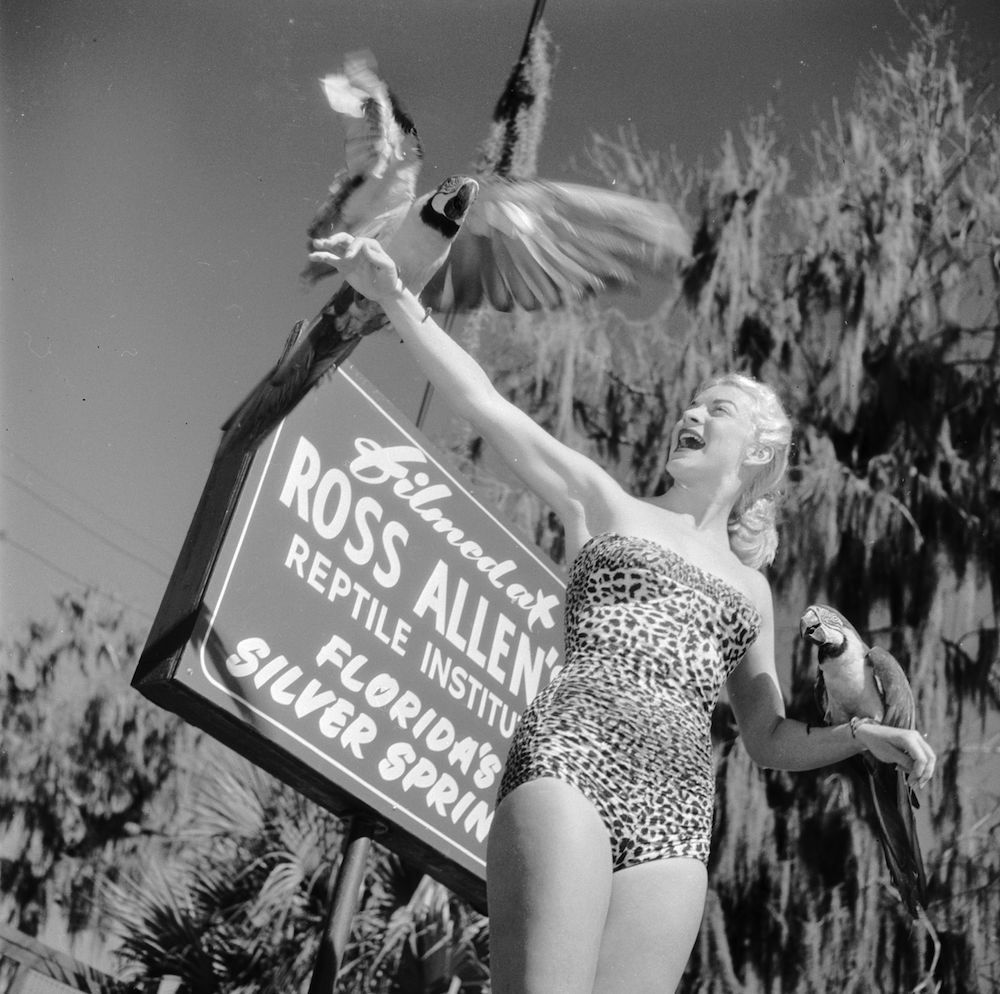 circa 1950:  Secretary and part-time model Ginger Stanley holding two exotic birds at Silver Springs, Florida.  (Photo by Bruce Mozert/Three Lions/Getty Images)
