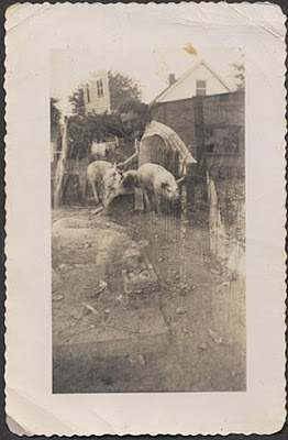 1940s woman on farm double exposure vintage photo piglets
