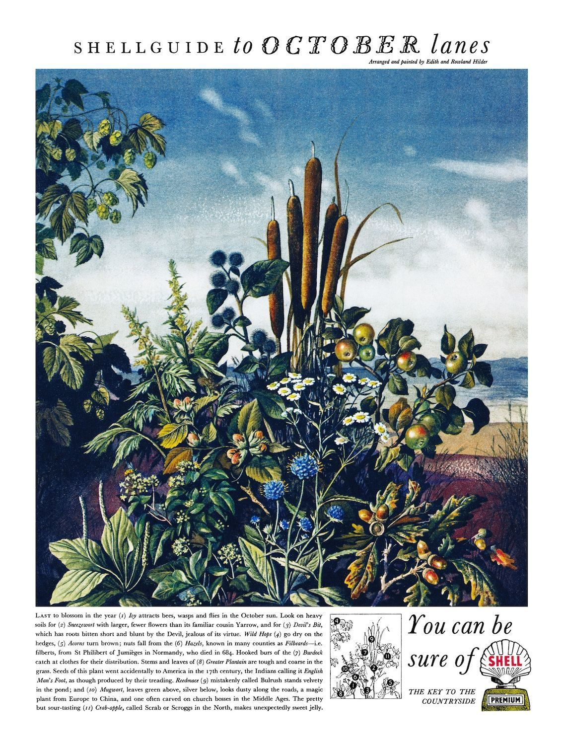 1954, illustrated by Edith and Rowland Hilder