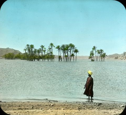 Partly submerged palms above Nile dam, Upper Egypt 1908, by Stereo-Travel Co.