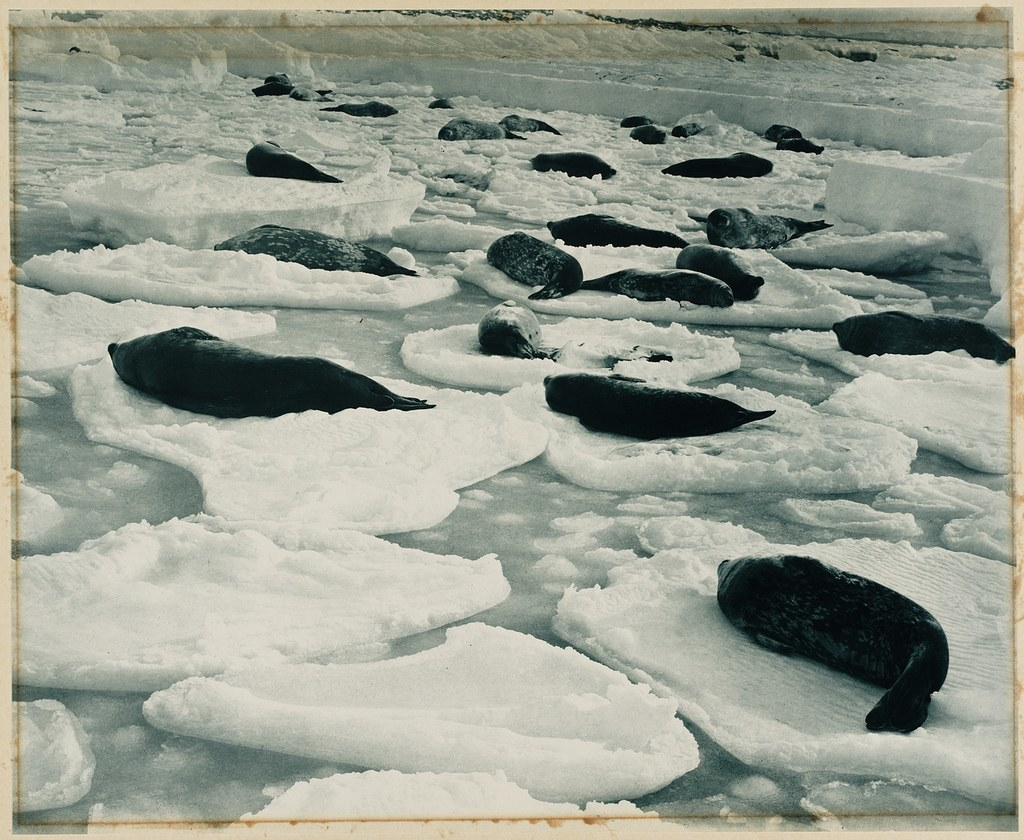 A dreamy Venice in seal-land, from [Exhibition of pictures taken during the Australasian Antarctic Expedition and other photographic studies by Frank Hurley], 1911-1914