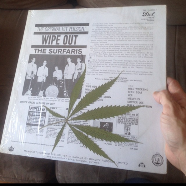 @thepilotson found this strange plant inside of a copy of 'Wipe Out' by the Surfaris.