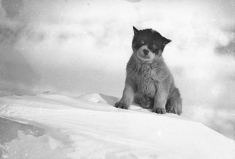 Blizzard, the pup in Antarctica