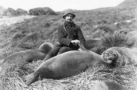 Arthur Sawyer with sea elephant pup / Format: Silver gelatin photonegative