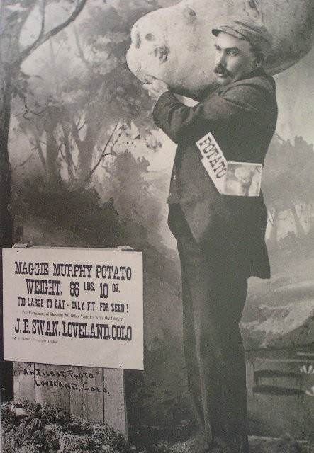 W.L. Thorndyke, editor of the Loveland Reporter, came up with an idea to help Swan promote his spuds at an 1894 street fair. Thorndyke's idea was to create a hoax photograph of Swan showing off a truly massive potato — one as large as a boulder. He suggested Swan could pass around copies of the photo as a tongue-in-cheek advertisement. To make the photo, Swan and Thorndyke enlisted the services of photographer Adam H. Talbot. Talbot took a photo of a potato and enlarged it to mammoth size. He then cut out a wooden board the size and shape of this enlarged image and he attached the photograph to the board. Finally, he posed Swan holding this giant faux-potato on his shoulder.