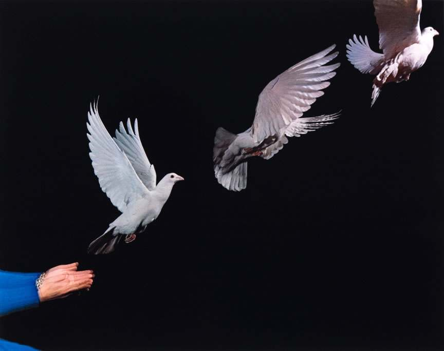 Pigeon Released 1965