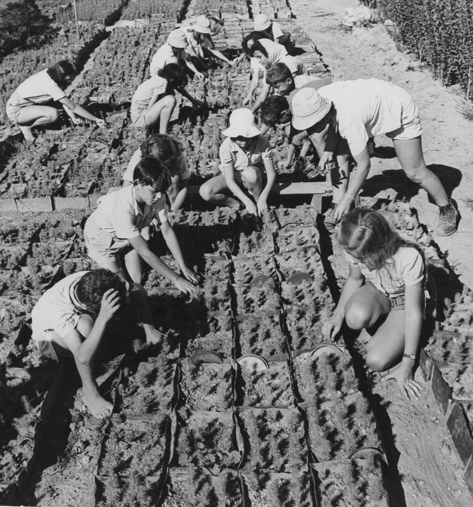 City children helping to produce seedlings, which will later be planted in the Negev Desert, Israel, circa 1950. (Photo by George Pickow/Three Lions/Hulton Archive/Getty Images)