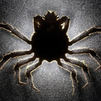 Mindsuckers: Brain-Controlling Parasites That Turn Creatures Into Zombies