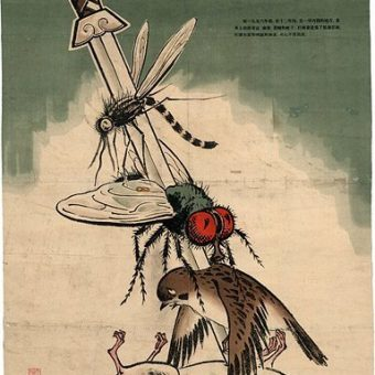 When China Wiped Out the Common Sparrow And Slit Its Own Throat (1958)