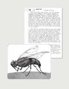 """Early correspondence between Gorey and Neumeyer centered on the children's book Donald and the..., which Neumeyer had originally written and illustrated in watercolor for his children. On the upper left corner of the letter accompanying this housefly illustration, Gorey taped the head of the """"model."""" (""""I add that it was a corpse before I began using it,"""" Gorey wrote.)"""