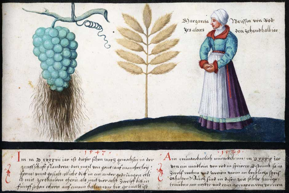 Wondrous Wheat, Bearded Grapes and Margaretha Weiss