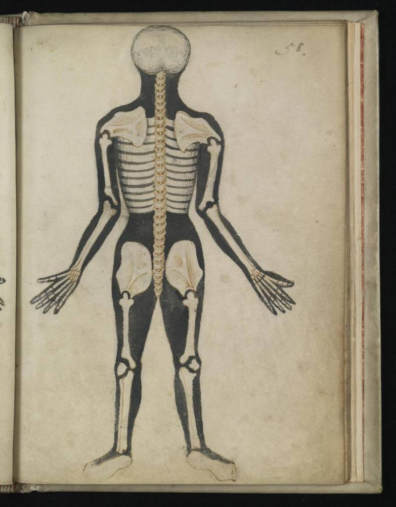 4 Anatomical Illustrations from 15th-century England