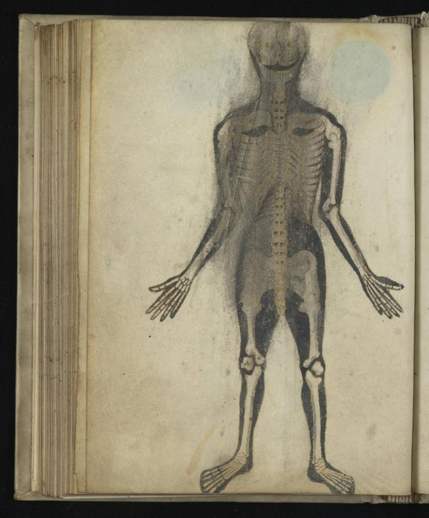 5 Anatomical Illustrations from 15th-century England